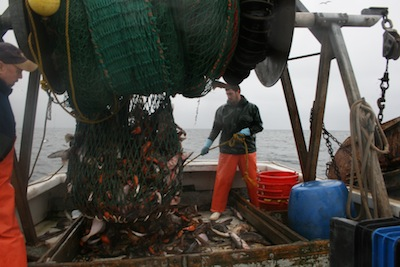 A groundfishermen on the Gulf of Maine — one of commercial fishing's endangered species. Melissa Wood photo.