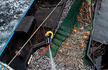 The Alaska pollock fishery relies on its reputation of abundance and sustainability as well as safety. Corey Arnold photo.