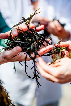 2016 0627 ITI seaweedfest