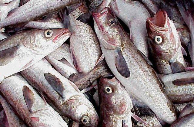 Study finds fish stocks improve worldwide with management
