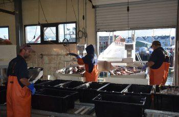 Portland Fish Exchange employees hard at work unloading a catch in June 2016. Doug Stewart photo. sport fishing