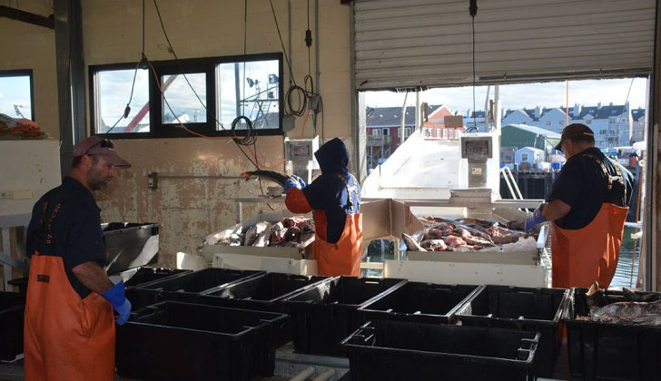 Portland Fish Exchange employees hard at work unloading a catch in June 2016. Doug Stewart photo. sport fishing