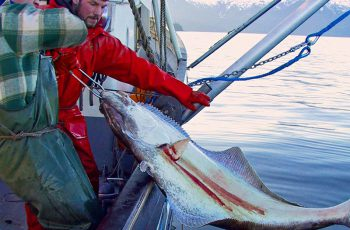 Halibut longline survey southeast Alaska 2004 NOAA