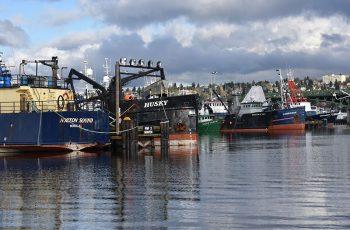 Boats tied up at Fishermen's Terminal, Seattle. Doug Stewart photo.