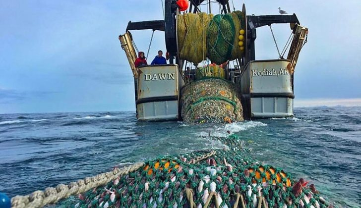 Responsible Fisheries Management: Alaska's certification program will go it alone