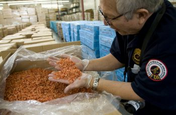 An FDA field inspector checks imported shrimp for signs of contamination or spoilage, and prepares samples for laboratory analysis. FDA photo.