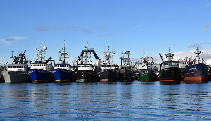 A full dock at Fishermen's Terminal in Seattle. Fishing fleets coast to coast have been largely idled by restaurant shutdowns and dropoff in demand. Doug Stewart photo.