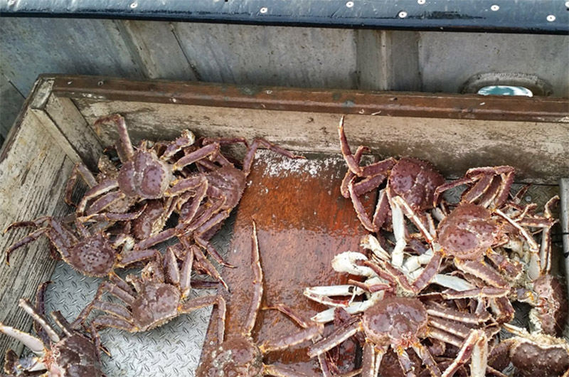 Red king crabs still in a spiral | National Fisherman