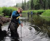 Call me maybe: Alaska salmon habitat initiative gets qualified yes from state Supreme Court