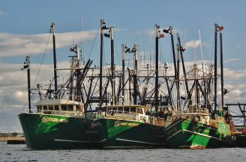 Some of Carlos Rafael's boats tied up in New Bedford. Photo by Flickr user Neal Wellons.