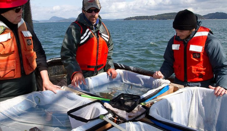 NOAA researchers at work on the Puget Sound Pelagic Food Web Study in 2011. NOAA photo.