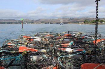 2014 Dungeness crab opener, Bodega Bay, Calif. Faces of California Fishing photo.