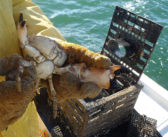 Stone crab landings hit bottom