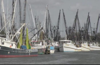 Brownsville, Texas, shrimp fleet