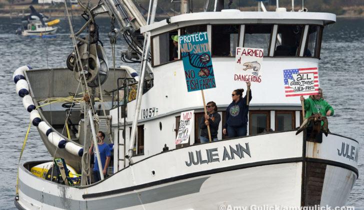 Protesting Farmed Salmon Rich Passage, Puget Sound Washington U.S.A.