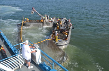 SAI Global recommends MSC certify the Atlantic menhaden fishery