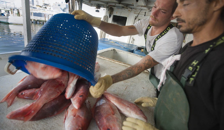 Shareholders Alliance supports new red snapper rules
