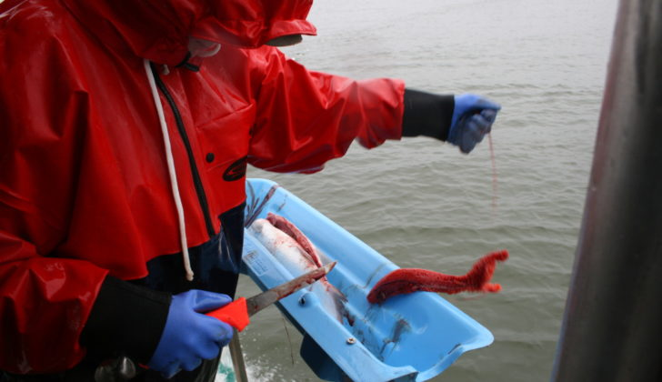 Alaska rebrands the fish head: ASMI report promotes full utilization