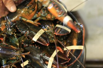 Market diversity helps Maine's lobster industry weather tariffs on an expanding Chinese demand