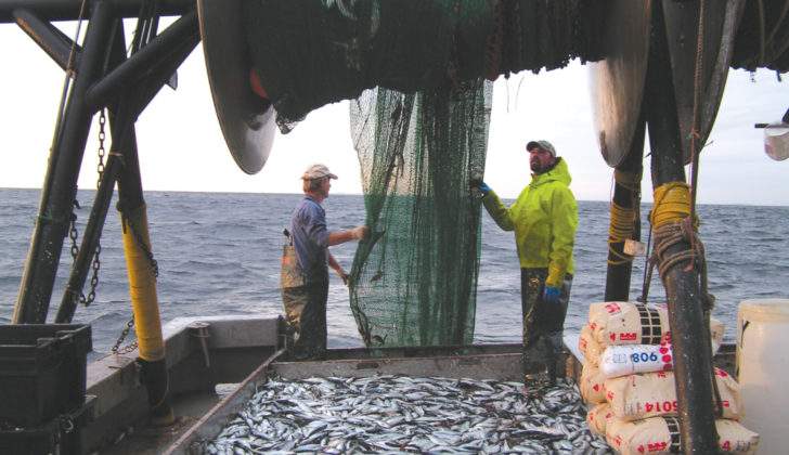 After a disastrous 2017 season, herring fishermen are cautiously optimistic