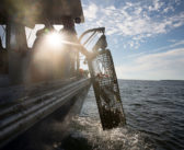 Bait abated: New species approved for Maine's lobstermen