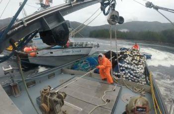 T-boned in the bay: Alaska seiner captains file plea deal
