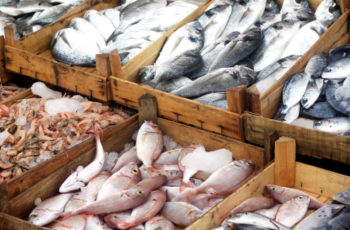 Congress must act to save U.S. fishing industry
