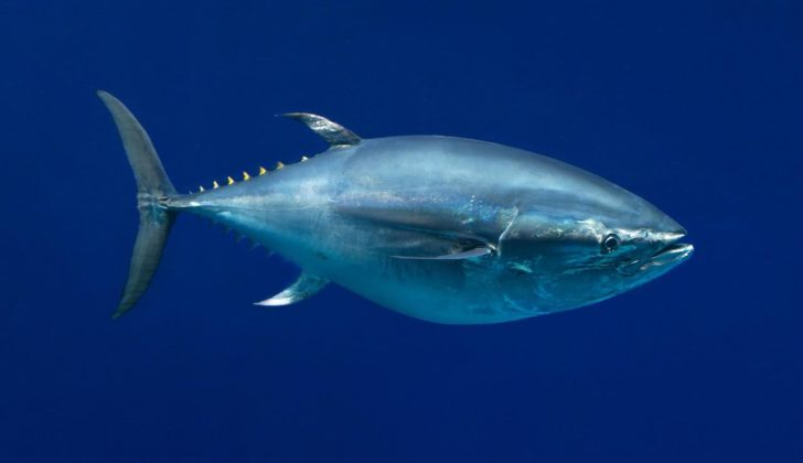 Japan's proposal to boost bluefin tuna catch rejected