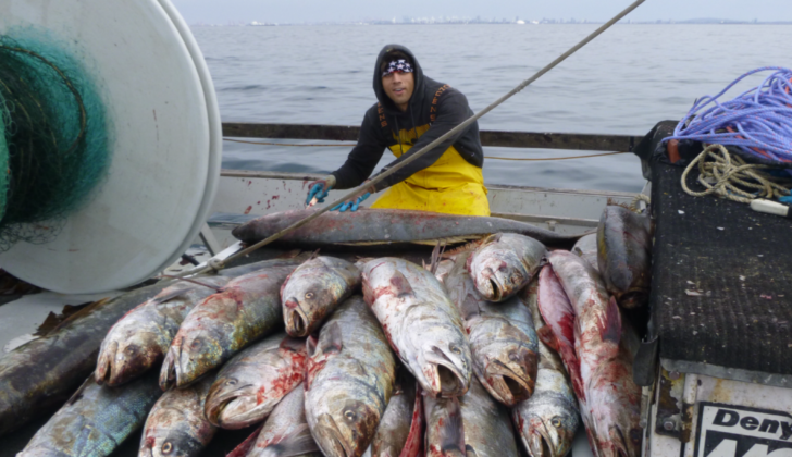 Fisheries marketing bill passes Senate unanimously