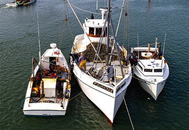 Feature Last Of The Buy Boats National Fisherman