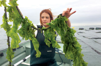 Science on Your Side: A sea lettuce solution