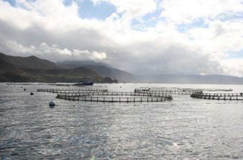Mail buoy: A place for aquaculture