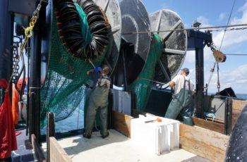 Summer Flounder Trawl