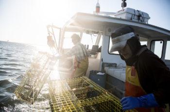Maine Lobstering