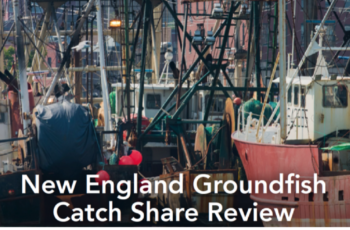 Groundfish meetings