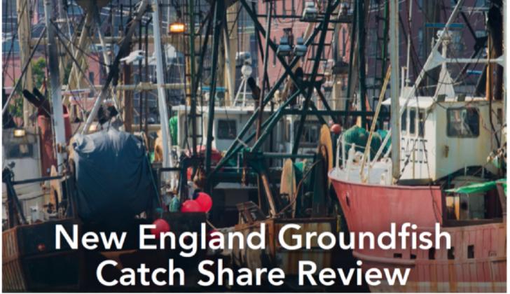 Groundfish meetings