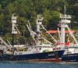 Tuna boats at Pago Pago in American Samoa. Greenpeace photo.