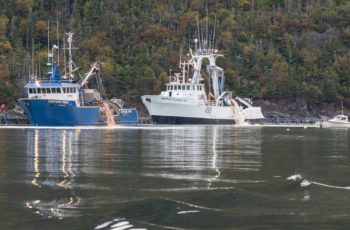 Pink residue was pumped into Fortune Bay during the cleanup of a salmon die-off at the Northern Harvest Sea Farms operation in Newfoundland. Atlantic Salmon Federation photo.