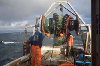 Cod fishing in the Gulf of Maine. Gulf of Maine Research Institute photo.