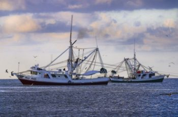 Making the grade: Gulf shrimpers take on new tech for a premium product