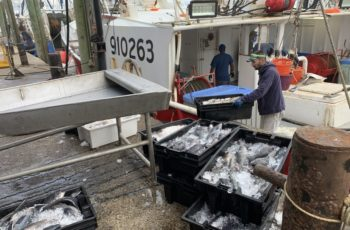 The crew of the Arianna Maria unloads a catch at the Fishermen's Dock Cooperative in Point Pleasant Beach, N.J. A collapse in restaurant supply demand as a result of coronavirus has caused many boats to tie up. Fulfill photo.