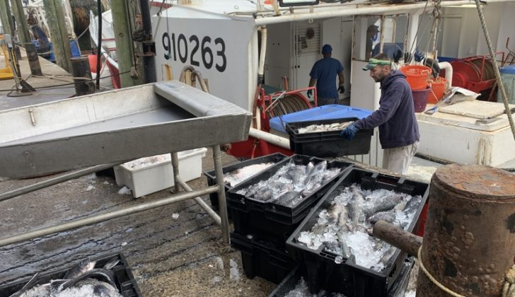 The crew of the Arianna Maria unloads a catch at the Fishermen's Dock Cooperative in Point Pleasant Beach, N.J. A collapse in restaurant supply demand as a result of coronavirus has caused many boats to tie up.